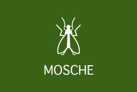 Trappole per insetti: mosche e moscerini