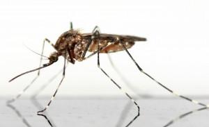 Proliferazione zanzare_ISI Trap