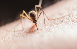 Lotta alle zanzare_Regione Piemonte
