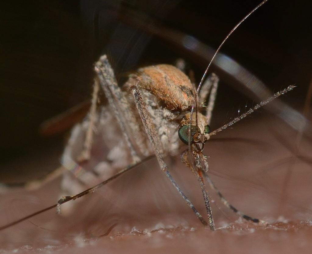 Zanzare - World Mosquito Day 2019