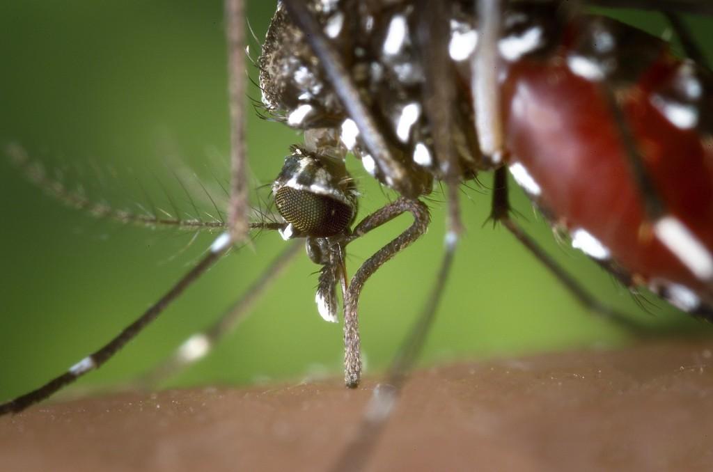 Febbre Dengue_ISI Trap