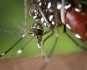 Febbre Dengue: tutto quello che c'è da sapere sul virus